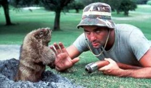 Bill Murray Gopher